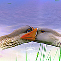 Goose Kiss - Featured In Comfortable Art - Nature Wildlife - Wildlife Groups by Ericamaxine Price
