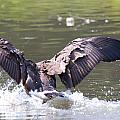 Goose Landing Iv by Vernis Maxwell