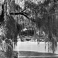 Goose Pond by Breanna Calkins