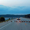 Goose Rush Hour by Lorna R Mills DBA  Lorna Rogers Photography