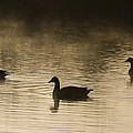 Goose Silhouette by Chris Smith