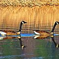 Goose Talk Too by MTBobbins Photography