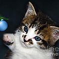 Gorgeous Christmas Kitten by Terri Waters