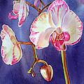 Gorgeous Orchid by Irina Sztukowski