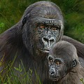 Gorilla And Baby by David Stribbling