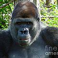 Gorilla Headshot by Gary Gingrich Galleries