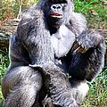 Gorilla by Kathleen K Parker