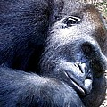 Gorilla by Marilyn Burton