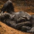 Gorilla - Painterly by Les Palenik