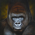 Gorilla by Timothy Scoggins