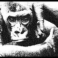 Gorilla Vogue by Doug LaRue