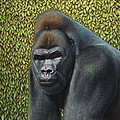 Gorilla With A Hedge by James W Johnson