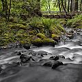 Gorton Creek Bridge by Erika Fawcett