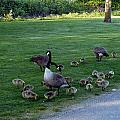 Gosling Daycare  by Nicki Bennett