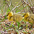 Little Ones by Betsy Knapp