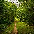 Gosnell Big Woods Trail by Tim Buisman