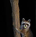 Gotcha The Cornbread Bandit by Randall Branham