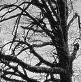 Gothic Oak by Maria Urso
