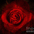 Gothic Red Rose by Absinthe Art By Michelle LeAnn Scott