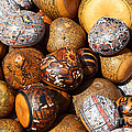 Gourds Galore by James Brunker