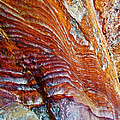 Graceful Grooves Rock In Petra-jordan by Ruth Hager