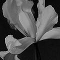 Graceful In Monochrome  by Heidi Smith