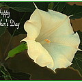 Graceful Moonflower - Happy Mother's Day by Joyce Dickens