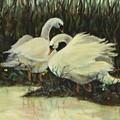 Graceful Swans by Jennifer Calhoun