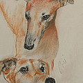 Graciously Greyhound by Cori Solomon