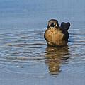 Grackle Bathing by Tom Janca