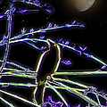 Grackle In The Willow Tree by Ericamaxine Price