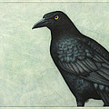 Grackle by James W Johnson