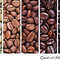 Grades Of Coffee Roasting by Jane Rix