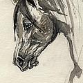 Grafik Polish Arabian Horse Ink Drawing by Angel Ciesniarska