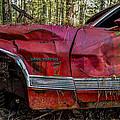 Gran Torino by Debra and Dave Vanderlaan