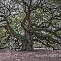 Grand Angel Oak Tree by Dale Powell