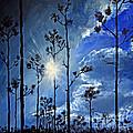 Grand Bahama Forest by Paola Correa de Albury