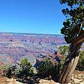 Grand Canyon 4 by Thomas Gregg Hoctor