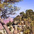 Grand Canyon 40 by Douglas Barnett