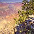 Grand Canyon 55 by Douglas Barnett
