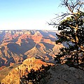 Grand Canyon 63 by Will Borden