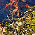 Grand Canyon Branches by Christopher Arndt