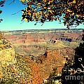 Grand Canyon Framed By Nature by John Potts