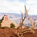 Grand Canyon by Jamie Heeke