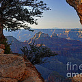 Grand Canyon National Park At Angels Point  by Schwartz Nature Images