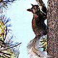 Grand Canyon National Park Kaibab Squirrel by Bob and Nadine Johnston