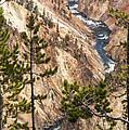 Grand Canyon Of Yellowstone by Bob Phillips