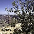 Grand Canyon by Peter Lloyd