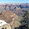 Grand Canyon Scene by Laurel Powell