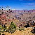 Grand Canyon South Rim Trail by Greg Norrell